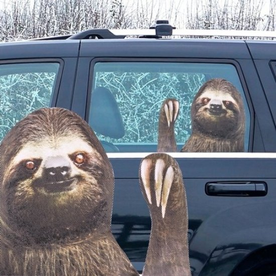Ride With A Sloth Gadgets